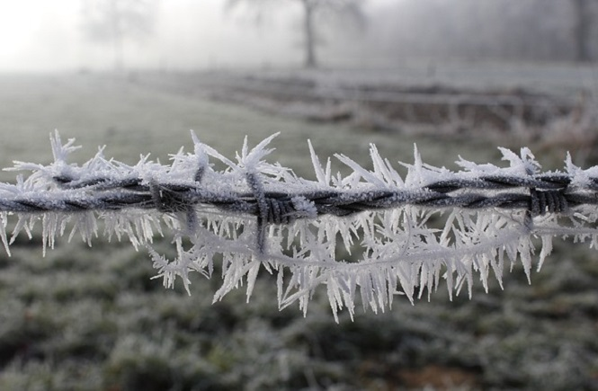 frost-1881723_640